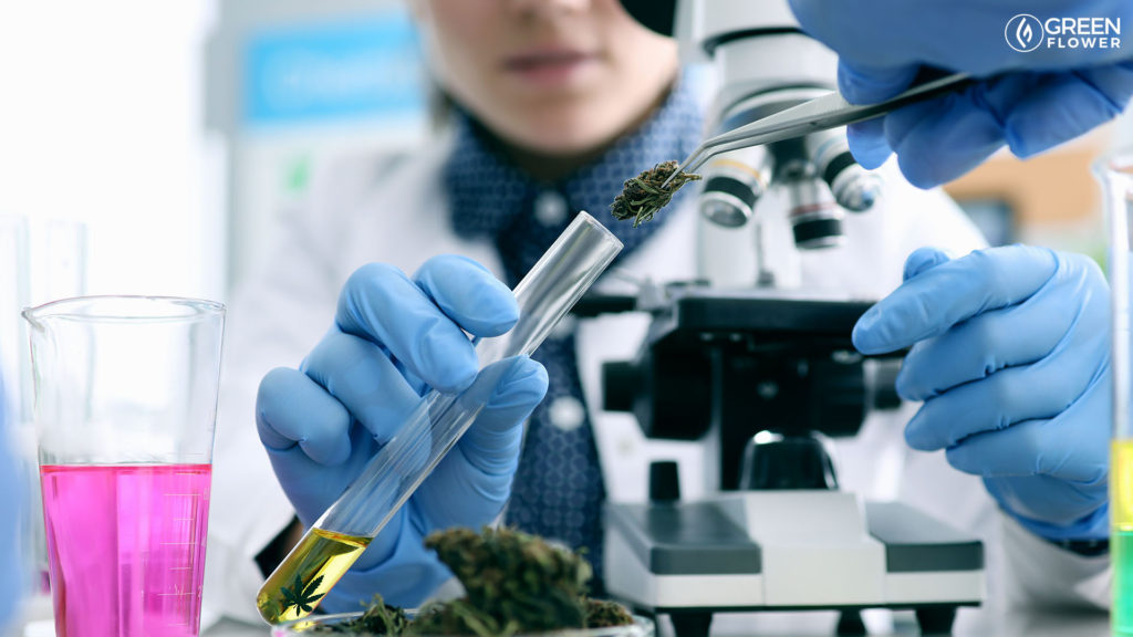scientist placing cannabis in a test tube