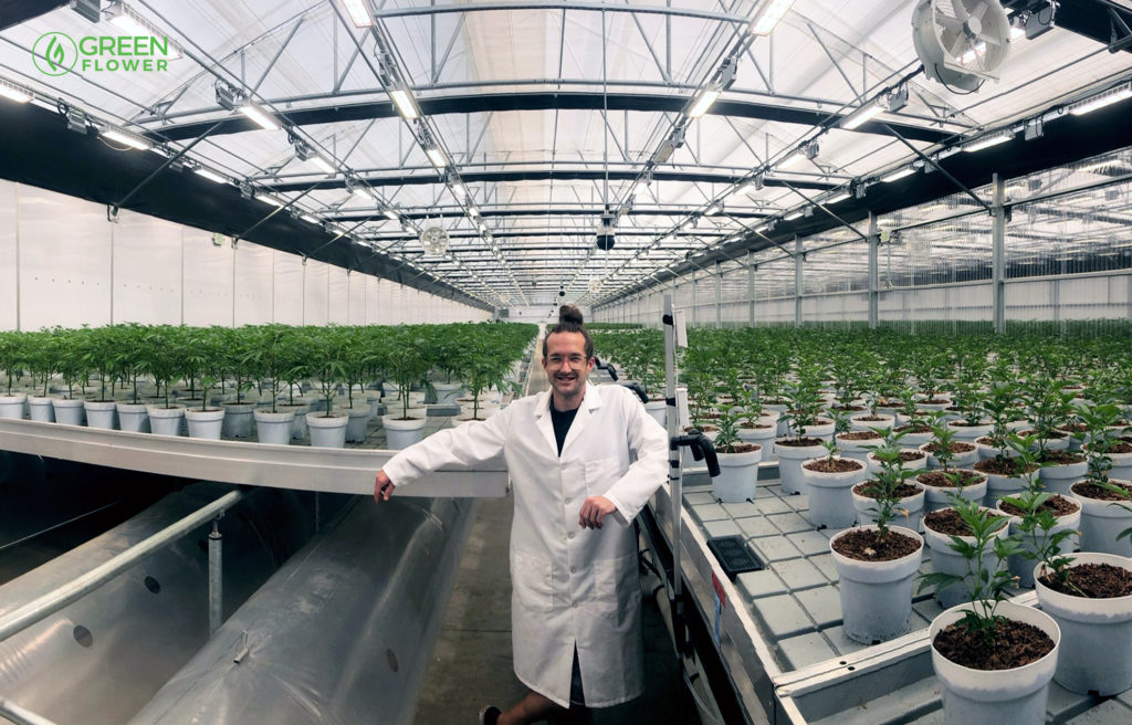 Cultivation director steve counsil with is cannabis plants