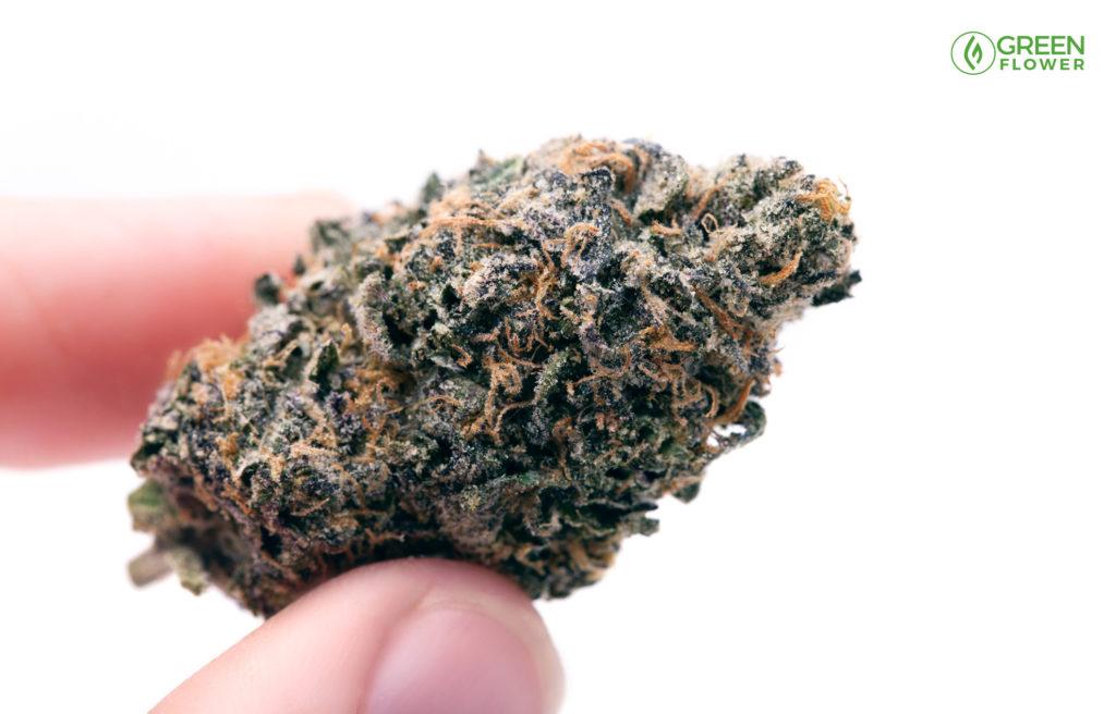 cannabis nug held in fingers