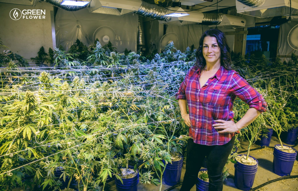indoor cannabis grow with female cultivator