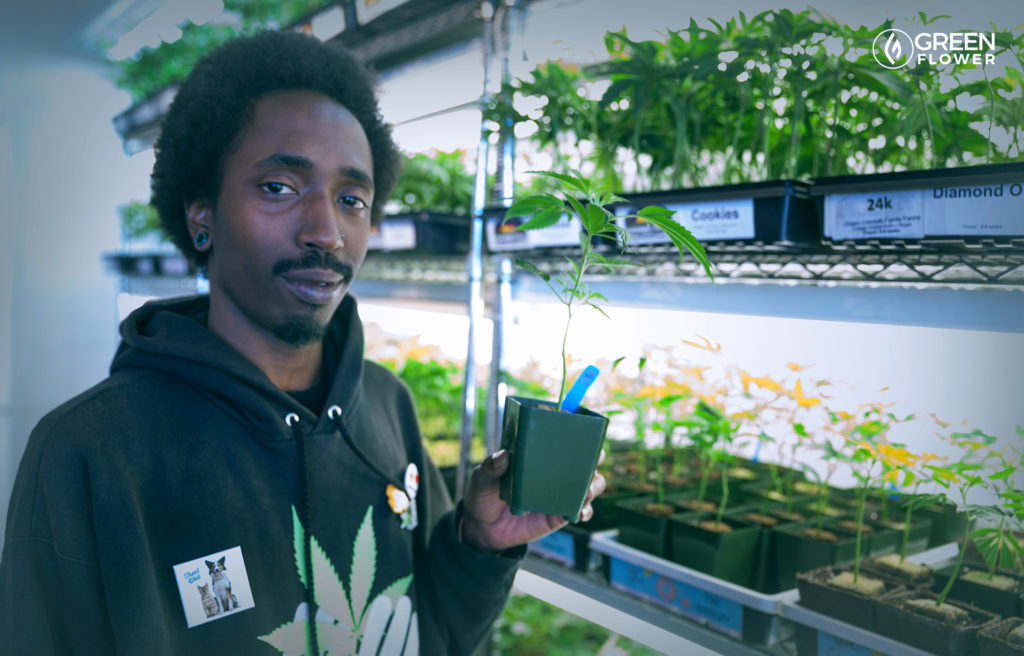 man holding cannabis clone for sale